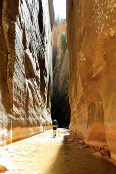 The Narrows, Zion National Park, Utah - USA