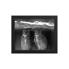 Framed poster of black and white funny owls - Canada - Toronto photographer - Framed Photo Print - Home Decor - Wall Art Funny Owls, Toronto Photographers, Home Decor Wall Art, Animal Pictures, Canada, Black And White, Frame, Prints, Poster