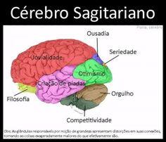 signo_cerebro9