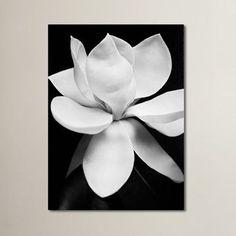 Tulipa Double Black & White Photographic Print on Canvas & Reviews | AllModern