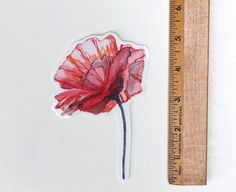 This is a vinyl sticker of my original watercolor painting Poppy 3  Size Approximately 5 x 3.5 measured from top to bottom and across the flower
