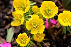 Top 10 Winter Bloomers For Your Flower Garden - Birds and Blooms