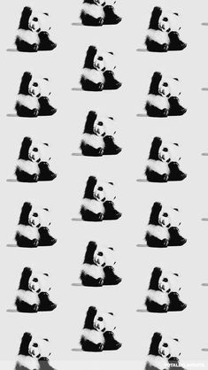 Would Love To Win The Jcp Gift Card NicolelovesJCPO HopeYouLikeMyPins Panda Pattern Wallpaper IphoneIphone