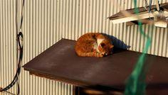お昼寝猫(A-018) 猫写真-横浜 #猫写真