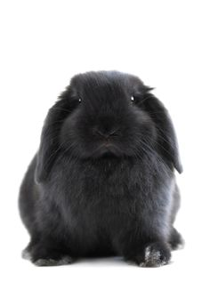 31 fluffy buzzwords that marketers overuse (and an adorable bunny photo)  http://fredmasey.com Communications