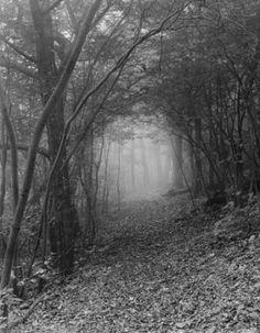 Appalachian Trail & Mist,