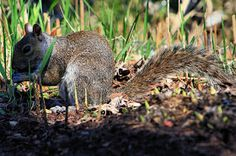 Back to the Basics!: Guest Post: How to Keep Garden Pests Away Naturally