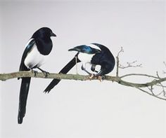 The joy I feel when I see two magpies.