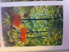 Fritillaria Officinalis