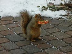 Squirrel eating pizza. I love him so much! <3