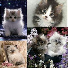 Cuties them all♥