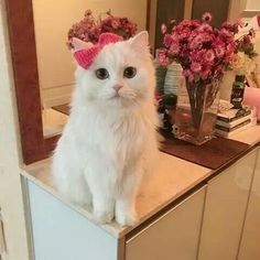 Never Seen Enough of Cute Kittens Pretty Cats, Beautiful Cats, Pretty Kitty, Cute Kittens, Cats And Kittens, Photo Chat, Tier Fotos, White Cats, Baby Cats