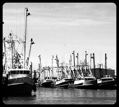 Cape May fishing boats