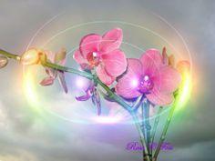 Фантастичні квіти - заставки для робочого столу, №10455