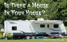 Positively Angel: How to keep mice out of campers