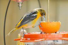Orange Bird Feeder Activity For Children's Church- Proverbs 15:13