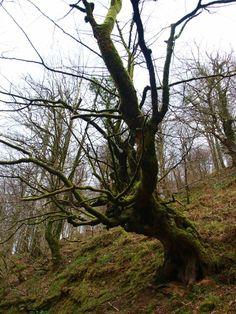 Reserva del #Saja #Cantabria