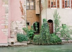 Overgrown Plants in Annecy France | photography by http://emthegem.com