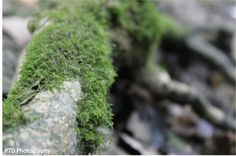Stick with moss