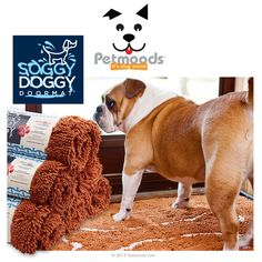 Costco Dog Bed Home Pinterest Costco Dog Beds And Dog