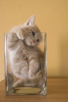 Of course, cats are not actually liquid–but if they are really solid, how do they move, contort, and manipulate their bodies in ways that seem so odd to us humans?