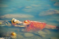 at the mother river Haridwar, Rishikesh, Fish, River, Pets, Animals, Animais, Animales, Animaux