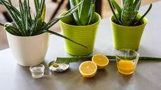 Domácí gel z aloe Aloe Vera, Health And Safety, Herbal Remedies, Herbalism, Planter Pots, Cosmetics, Tableware, Body Fitness, Gardening
