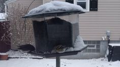 Downy Woodpecker Goldfinches Dark Eyed Junco Feeding Frenzy at Bird Feed...