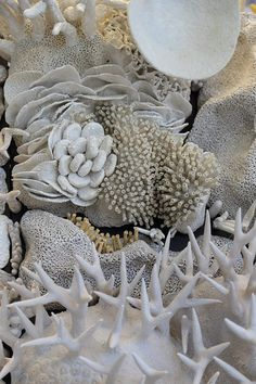 Courtney Mattison Artist and Ocean Advocate Coral Triangle Our Changing Seas II Glazed Ceramic, Ceramic Art, Arte Coral, Coral Bleaching, Inspiration Artistique, Underwater Creatures, Mosaic Projects, Paperclay, Sculpture