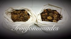 Fresh Truffle Tuber Borchii By #Troufonomades