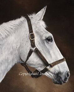 Equestrian artist Lisa Miller produces original horse painting and portraits. The perfect birthday gift or christmas present for the horse owner, horse racing enthusiast or art lover. Lisa Miller, Horse Racing, Race Horses, Thoroughbred Horse, Horse Art, Horse Horse, Art Prints For Sale, White Horses, Show Jumping