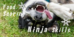 Ninja doggy skill ! #pamily Animal Design, Ninja, Pets, Animals, Animales, Animaux, Ninjas, Animal, Animais