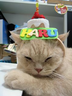 Cat Happy Birthday Hat