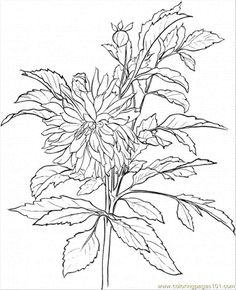 dahlia 3 coloring page free printable coloring pages