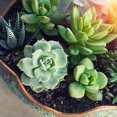 Decoración de interiores y exteriores, decora tu casa - HOLA Agaves, Cactus Y Suculentas, Succulents, Plants, Vegetable Garden, Garden, Home, Succulent Plants, Indoor Trees