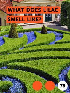 Learn Types of Lawn Sprinklers Perennial Flowers List, Perennial Flowering Plants, Flowers Perennials, Planting Flowers, Bradford Pear Tree, Types Of Lawn, List Of Flowers, Pink Flowers, Lawn Sprinklers
