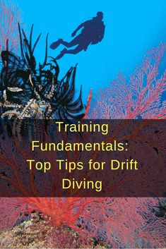 Drift diving can be effortless or challenging, depending on the dive site. Here are our top tips for staying safe when drift diving. Best Snorkeling, Best Scuba Diving, Technical Diving, Scuba Diving Equipment, Scuba Gear, Beach Adventure, Beach Activities, Koh Tao, Cozumel