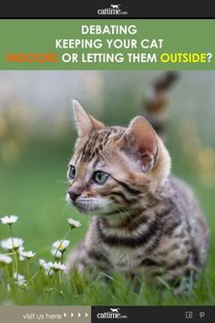 Indoor cats have quite a few things going for them that contribute to their longer average lifespans. Outdoor cats face a lot of day-to-day dangers outside that indoor cats don't. Cosmic Egg, Indoor Cats, Cat Facts, Cat Love, The Great Outdoors, Indoor Outdoor, The Outsiders, Kitty, Face