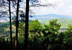 Forêt typique du paysage israélien Photo By: KKL-JNF ARCHIVE