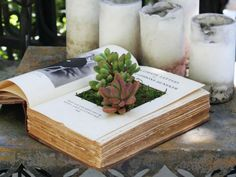 How to Make Your Own Book Planters for Succulents - See more at: http://worldofsucculents.com/make-book-planters-succulents