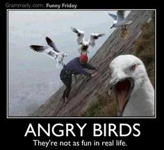 Angry Birds...not so fun in real life...