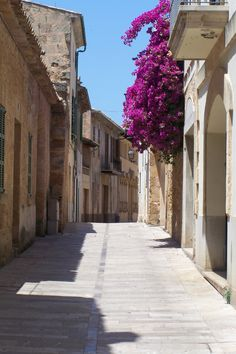 Alcudia is surrounded by flowers on every single corner