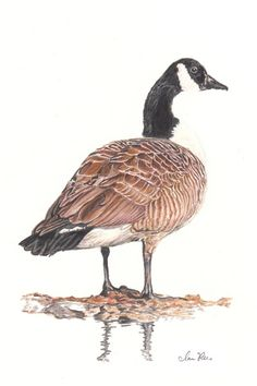 Goose by ~reesmeister on deviantART