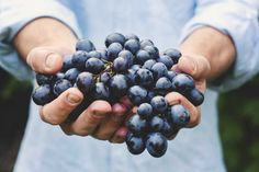 Vinho Pode Te Ajudar a Perder Peso (notícia que chega em boa hora) | Vinhos de Hoje