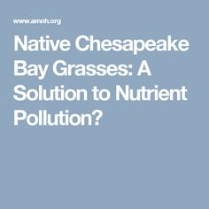 Native Chesapeake Bay Grasses: A Solution to Nutrient Pollution?