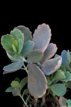 wei bl hende blumen und pflanzen bestimmen zimmerpflanzen pinterest pflanzen. Black Bedroom Furniture Sets. Home Design Ideas