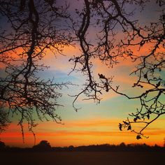 The sunset streaks the sky orange, blue and yellow behind a veil of branches whose random protrusions look elegantly jagged against the smooth miracle of the sunset. #sunset #trees #nature #beautiful #elegant #dusk #winter #english #orange #yellow #clouds #pink #bucolic #pastoral #wild #scene #view #romantic #love #festive #enjoy #november