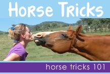 Teach your horse tricks. A wonderful way to have fun and improve the bond with your horse.