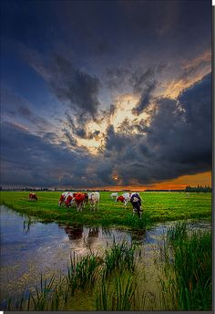 Holland's landscape
