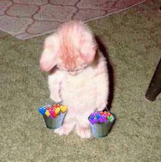 Bookmarks / Twitter Cute Baby Cats, Cute Funny Animals, Cute Baby Animals, Funny Cats, Fluffy Animals, Stupid Funny, Cute Cat Memes, Cute Love Memes, Sad Cat Meme